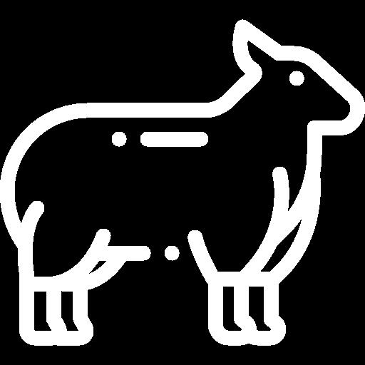 Lamb BBQ Pack